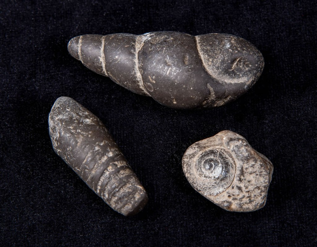 A nice Trio of Pre-Historic Snail Fossils